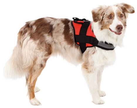 Reflective Harness Maestro 44-55cm / 25mm